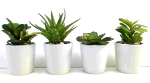 Green Succulent Plant In Ceramic Pot £2.99 each Dunelm